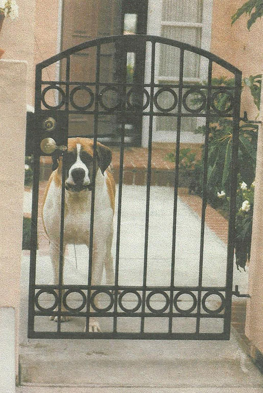 Custom Iron Puppy Gate