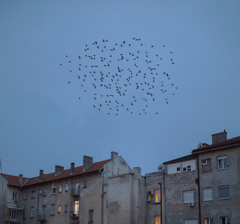 the swarm, 2020