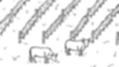 Weingarten mit Kuh Zeichnung