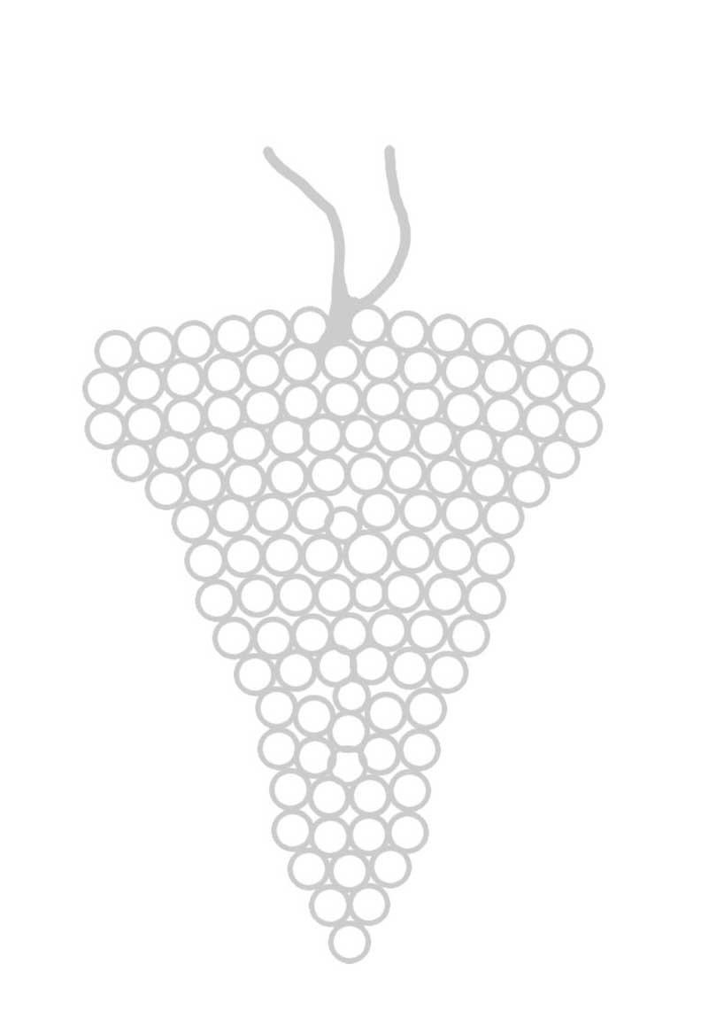Weintraube Zeichnung