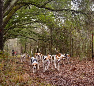 Hounds at Huspa.JPG