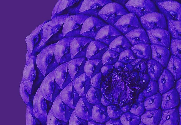 PommePin-violet.jpg