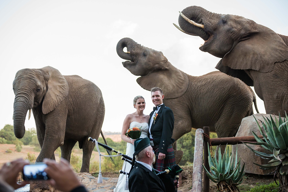 Safari wedding with elephants