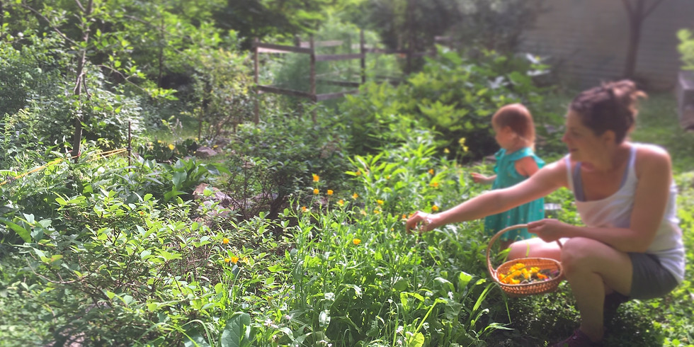 WOODLAND PERMACULTURE Course 2: Summer