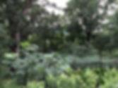 IM-PerennialTerracedLandscape.jpg