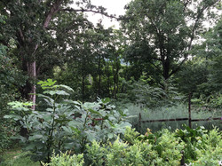 Terraced Food Forest