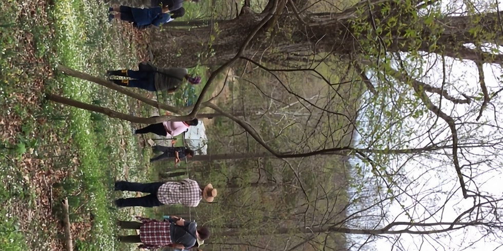 WOODLAND PERMACULTURE Course 1: Spring