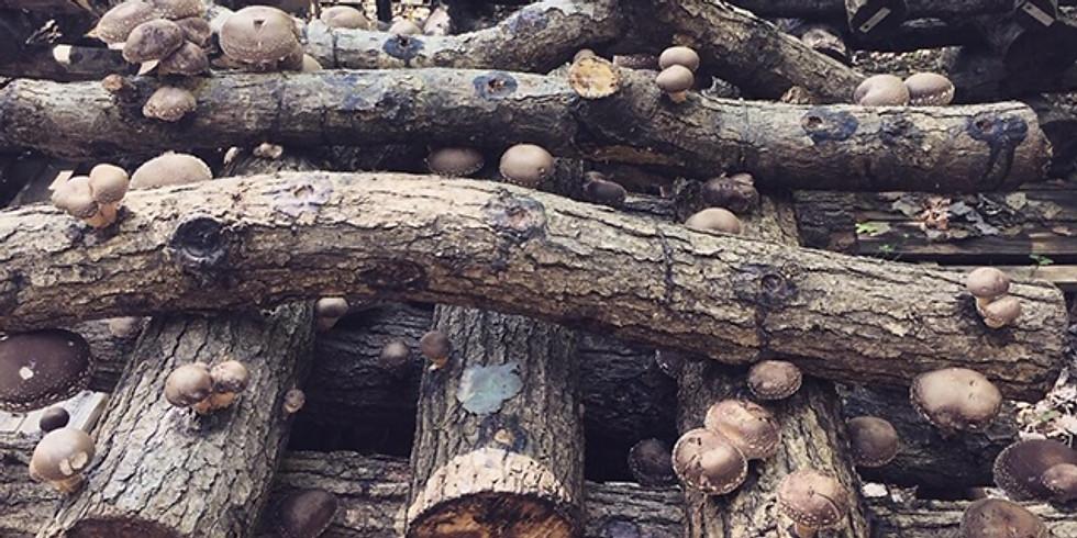 Mushroom Cultivation Workshop #2