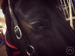 Ingen bekymringer? Køb en hest...