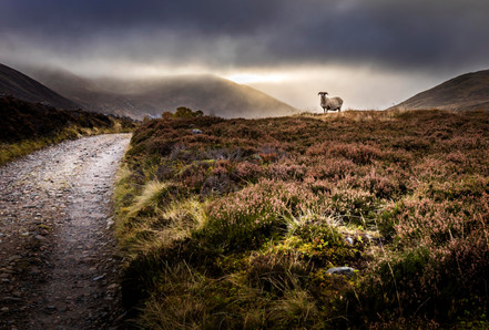 Loch Callater_SM.jpg