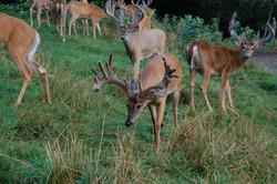 Guaranteed Whitetail Hunts (2).jpg
