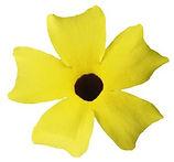 Thunbergia_Lemon_flower-_Jaldety_©.jpg