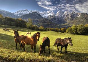 polo horse riding retreats travel