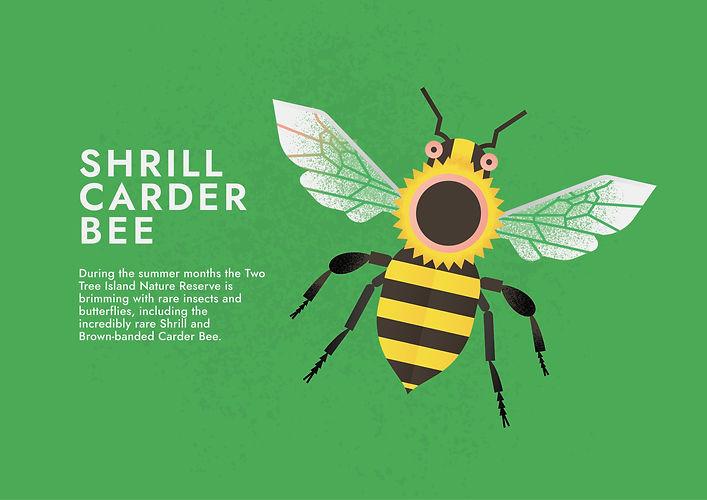 Shrill Carder Bee - Folio page.jpg