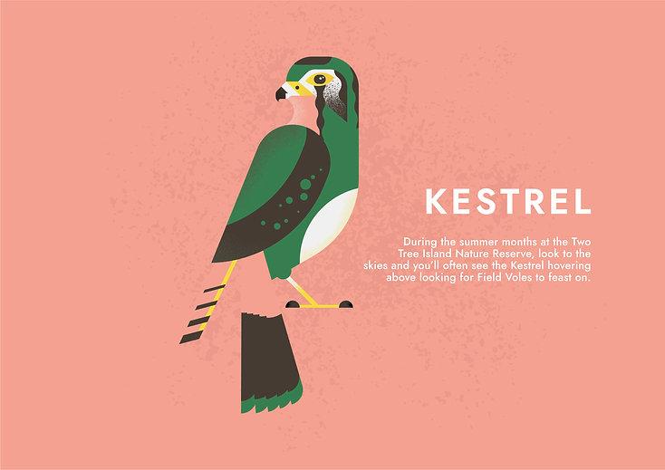 KESTREL - Folio page.jpg