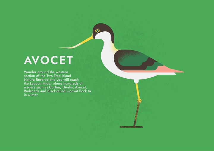 Avocet - Folio page.jpg