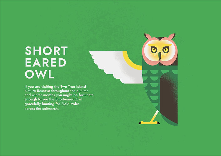 Short Eared Owl - Folio page.jpg