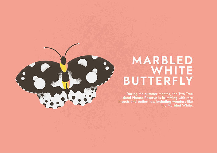 Marbled White (Alternate) - Folio page.j