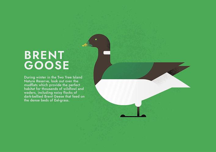 Brent goose - Folio page.jpg
