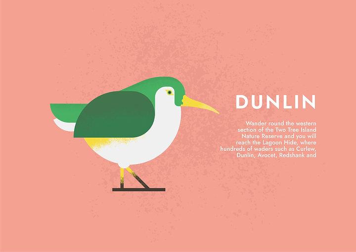 Dunlin - Folio page.jpg