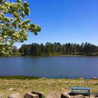 Lake Picnic Spot