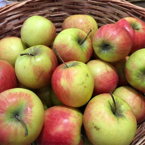 Apfel sauer Stk.