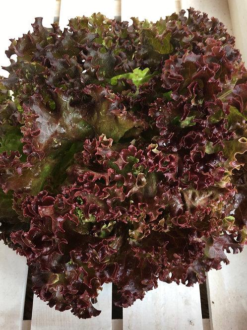 Salat diverse rot
