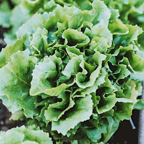 Salat diverse grün