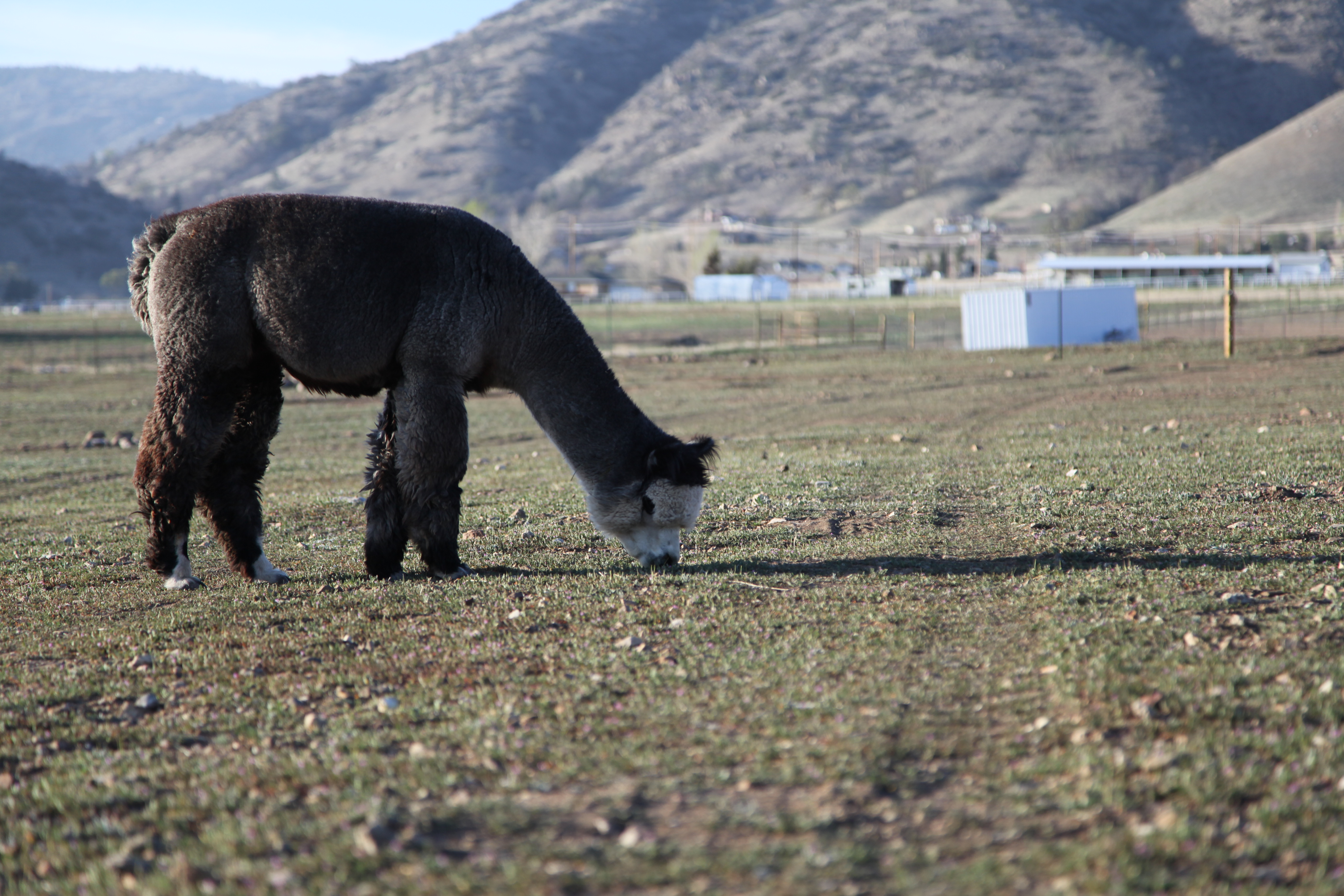 2014 - Adorable in the Pasture_99_8