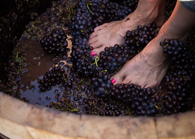 grape stomp.jpg