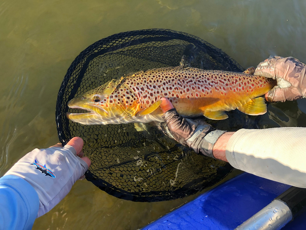 Catch and Release - keep em wet!