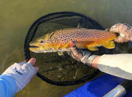 Fly Fishing Report - Green River March 18, 2020