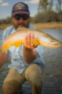 colby crossland, trout