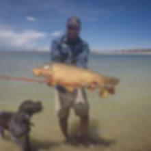 colby crossland, dog, carp