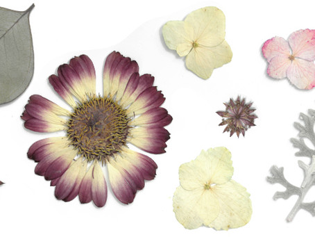 5 Flower Pressing Tips to Keep in Mind For Your Next Project