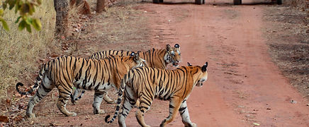 corbett safari, The Roar Resort