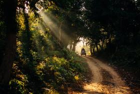 Jungle Safari, corbett safari booking