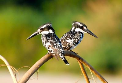 Paradise for Bird Watchers, corbett national park reservation