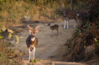 Rich Flaura & Fauna Inside Jim Corbett National Park