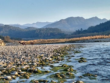 Things to do in corbett, The Roar Resort
