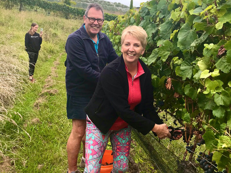 BRINGING IN AN EXCEPTIONAL VINTAGE - grape-picking at Tironui