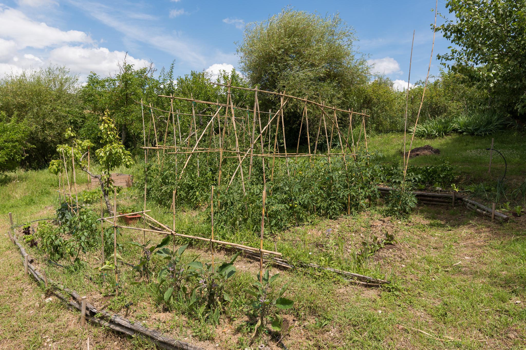 Organic veg Graden
