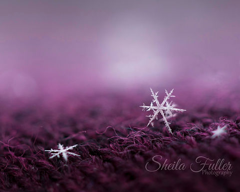 She Stands Out in a Crowd, Snowflake, Macro Photography