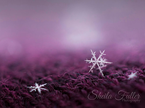 She Stands Out in a Crowd - Be faithful in small things.  It is in them that your strength lies.  ~ Mother Teresa