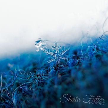 I See You, Snowflake, Macro Photography
