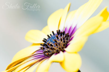 Sunny, Garden Flowers, Macro Photography