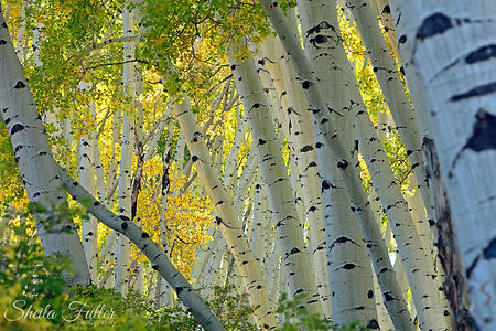 Lean Into Autumn, Autumn, Aspen, Colorado