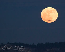 Super Moon, Full Moon, Colorado Springs