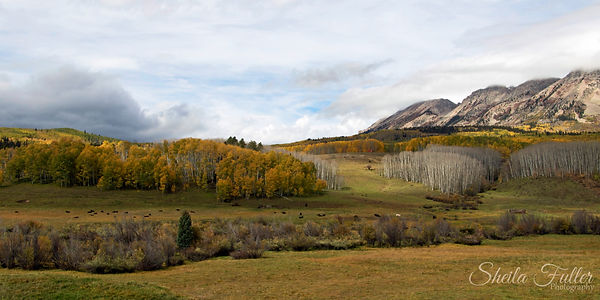 Autumn Splendor, Autumn, Colorado, Gunnison
