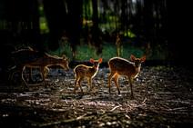 atan- nature.jpg